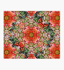 Bottlebrush from the Kaleidoscope Collection Photographic Print