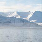 Skjalfandi Bay in Iceland by Sue Robinson