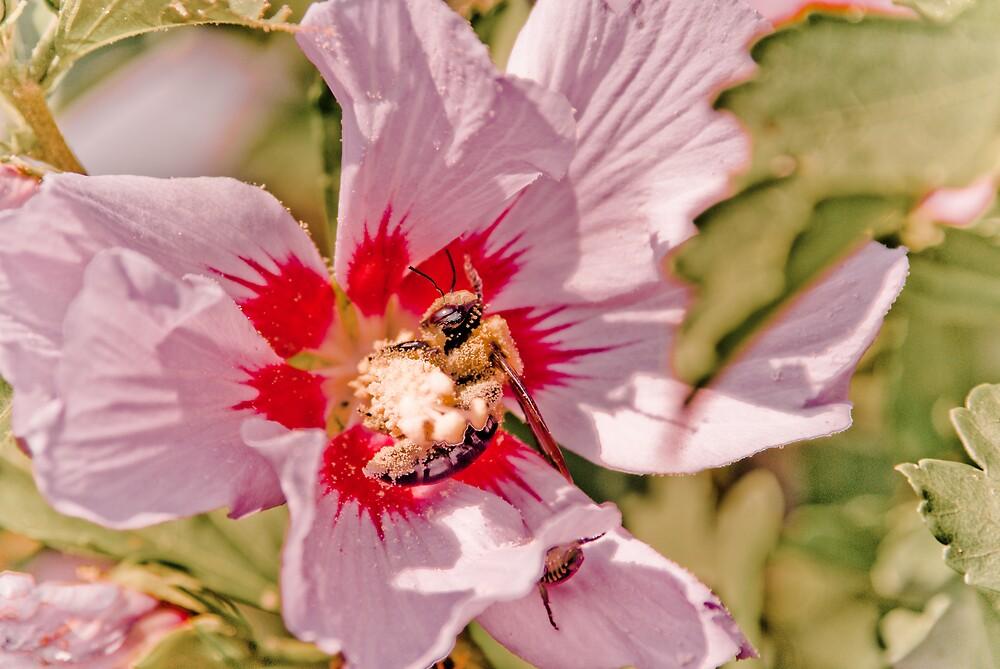 Pollen Junkie by Rod  Adams