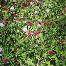 Meadow flowers by Jonesyinc