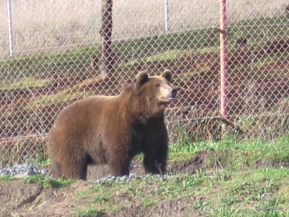 mak the Bear by charlierae