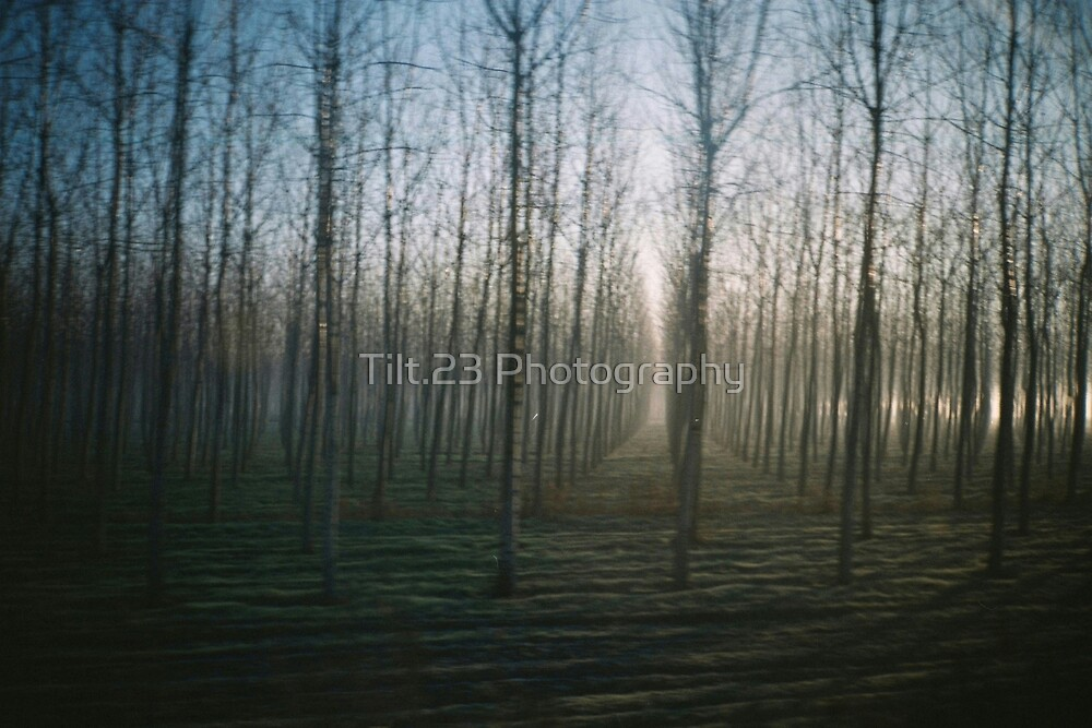 In the trees by Tilt.23 Photography
