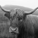 Highland cow I by peggieprints