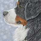 Bernese Mountain Dog - Let it Snow by bydonna