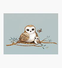 Baby Barn Owl Photographic Print