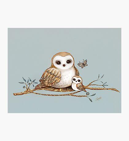 Baby Barn Owl Photographic Print
