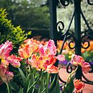 Tulips at the Gate by Jessica Jenney