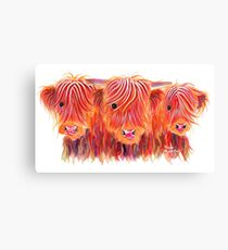 Scottish Highland Hairy Cows 'THE BOYS' by Shirley MacArthur Canvas Print