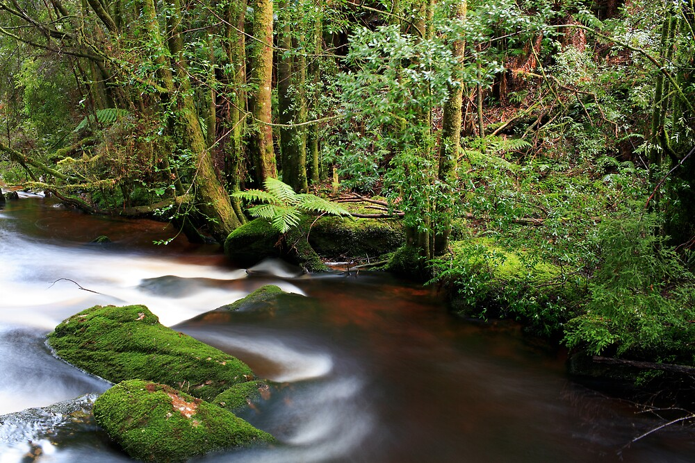 Nelson River, Tasmania by David Jamrozik