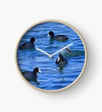 Coots Feeding Clock