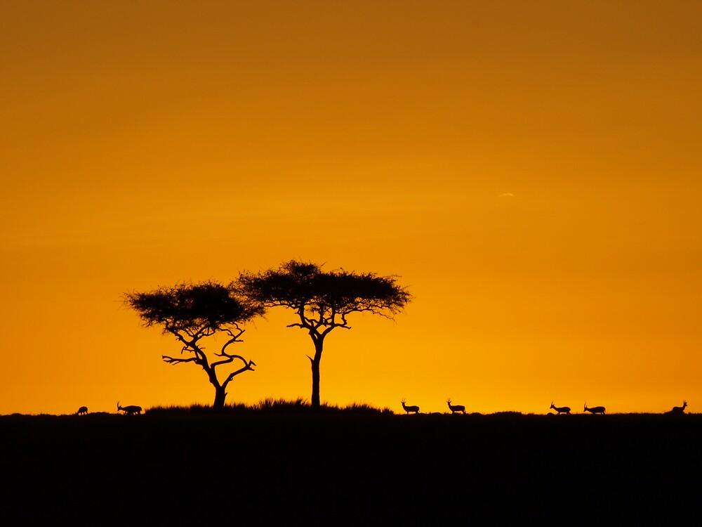 Sunset over the Masai Mara by David Odd