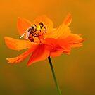 Orange Glow by Bobby McLeod