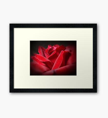A Perfect Rose Framed Print