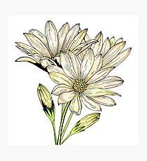 Spring Flowers - Daisy Flower - Floral Art - Wild Flower  Photographic Print