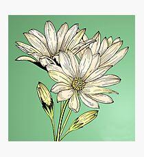 Daisies - Wild Flower Photographic Print