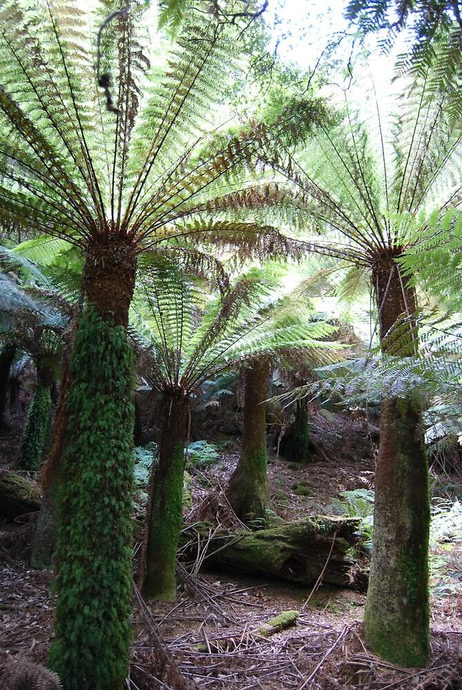 tree ferns by katejones