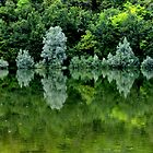 Reflections in green by annalisa bianchetti