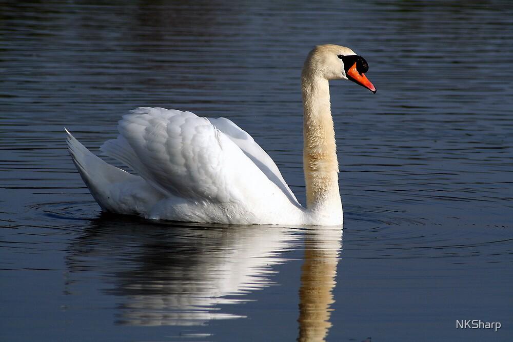 Swan on Reservoir in evening sunlight by NKSharp