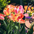 Tulips By the Garden Gate by Jessica Jenney