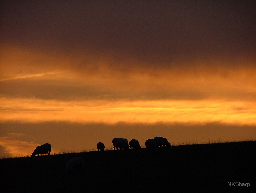 Sunset with sillhouetted sheep on the crest of a hill. by NKSharp