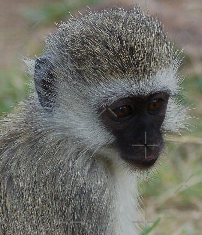 Monkey Magic by ApeArt