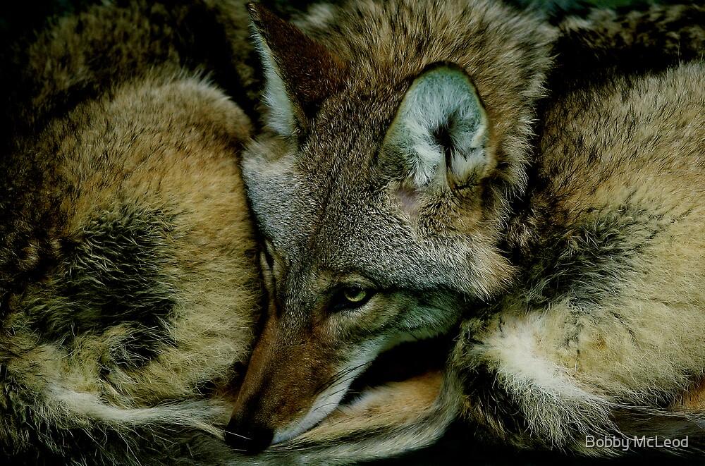 Snuggled In by Bobby McLeod
