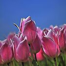 ...tulips with a glow... by John44