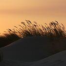 Dune 4232 by João Castro