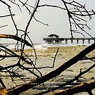 A Different View: Tybee Island's Beach by Jacqueline Cooper