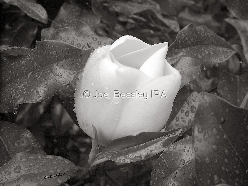 White Rain by © Joe  Beasley IPA