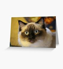 Beautiful RagDoll Cat Greeting Card