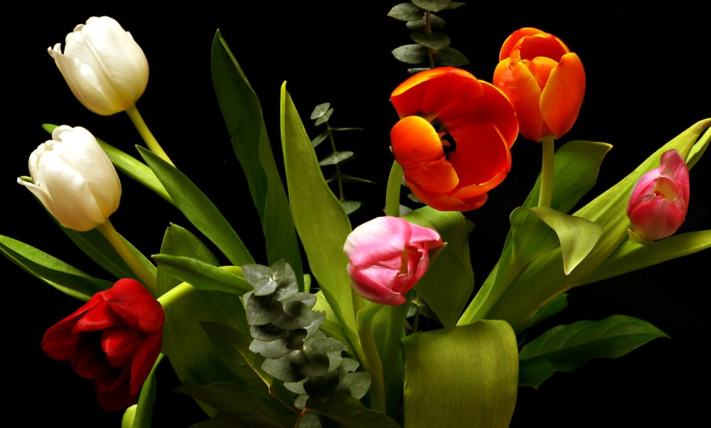 Tulip Arrangments by Swede
