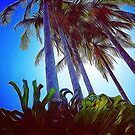 The Tropics by Paul Webster