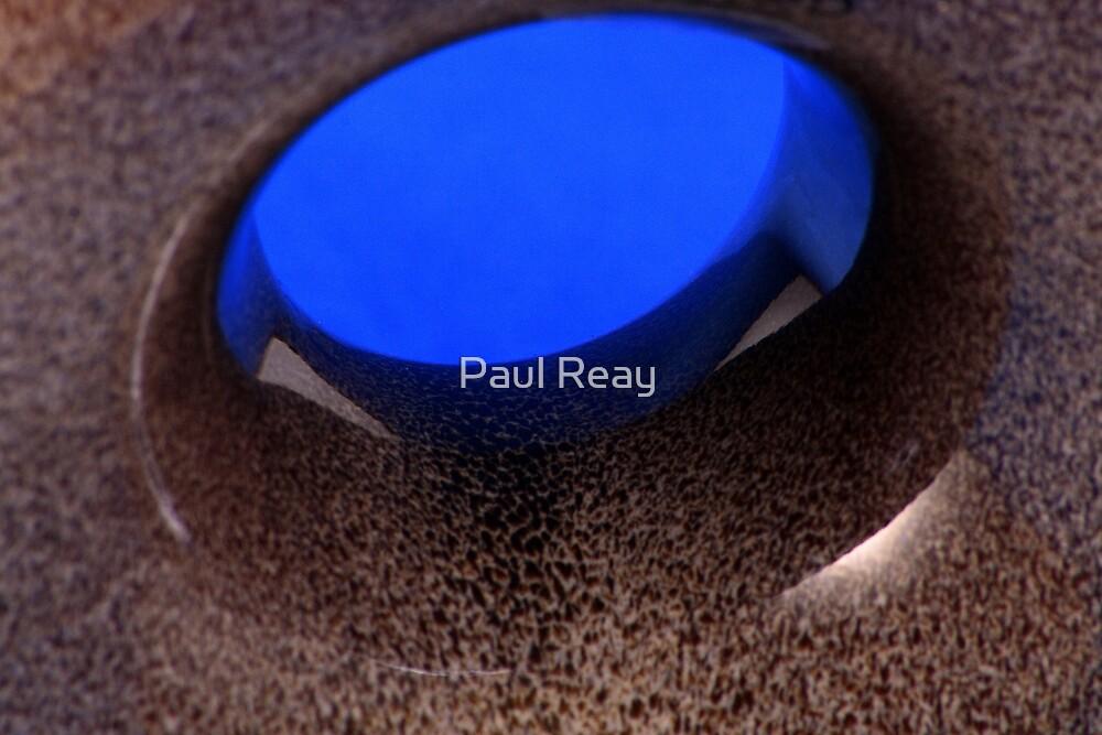 Vase 2 by Paul Reay