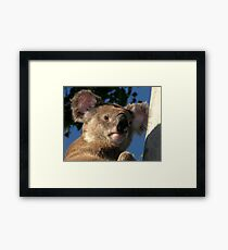 """Blinky Bill"" Framed Print"