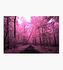 Infrared Trail - 1 Photographic Print