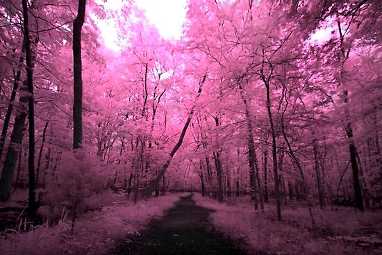 Infrared Trail - 1 by mal-photography