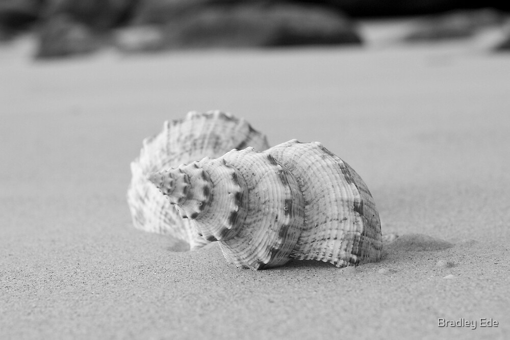 Black & White Shells by Bradley Ede