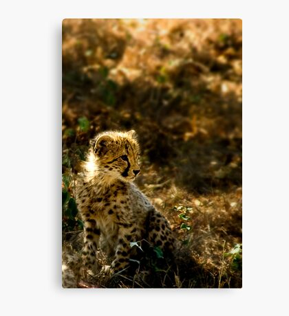 Why the Cheetah's Cheeks are Stained Canvas Print