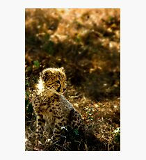 Why the Cheetah's Cheeks are Stained Photographic Print