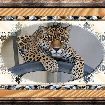Lounging Cat by Dorrie