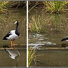 Four Moments in time - A sequence of events at Tidbinbilla by Wolf Sverak