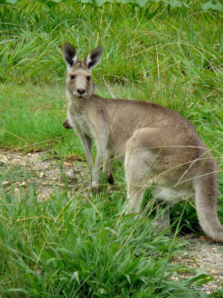 AUSTRALIA DAY ICON by Ekascam