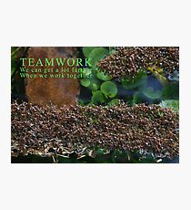 Teamwork Photographic Print