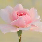 Pink Beauty by Vickie Burt
