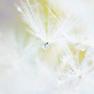i dream of cotton candy... by Natalia Campbell