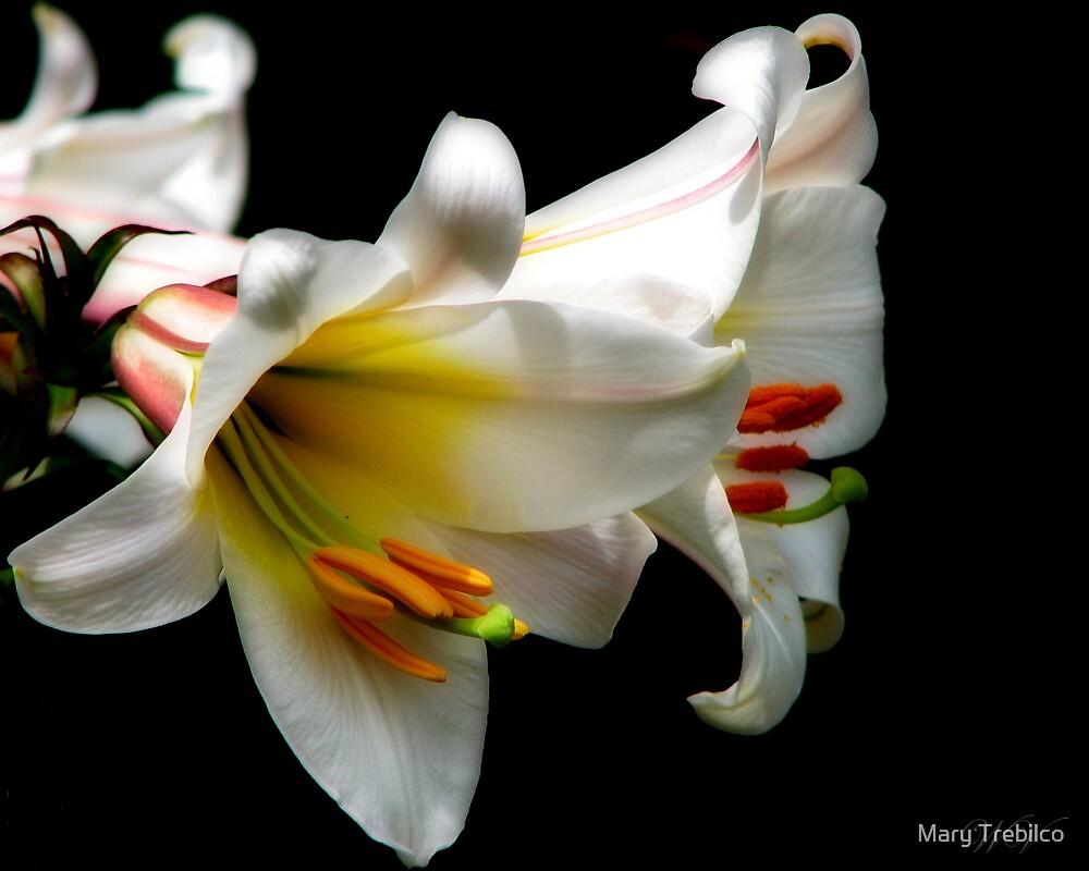 Christmas Lilies by Mary Trebilco