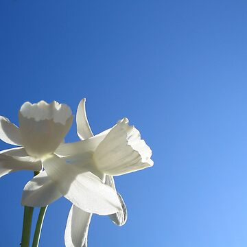 Daffodil Sky by artordie