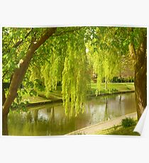 Willow Trees In Spring  Poster