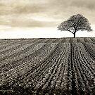 The Land by Martyn Starkey